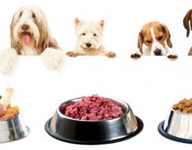 alimentazione_animale