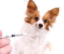 diabete-mellito-cane immagine in evidenza