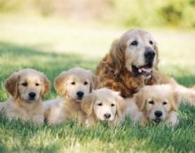 eclampsia-cane  evidenza