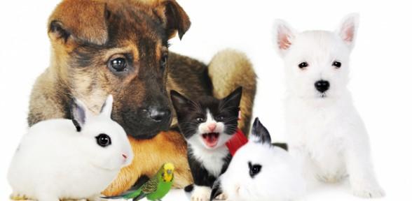 Corso di Alimentazione Casalinga per cane, gatto e coniglio